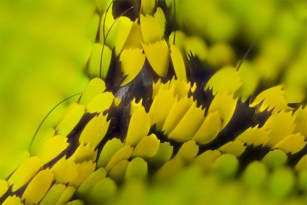 lgledhill-bw-birdwing2