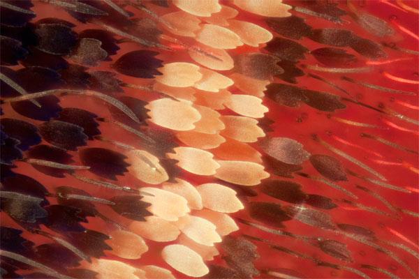 lgledhill-bw-Cithariasaurorina